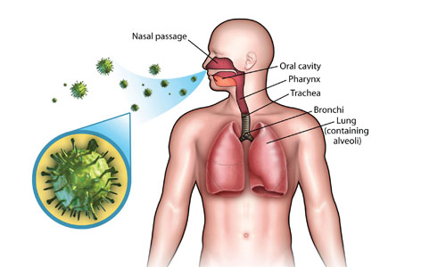 Respiratory System /Health education
