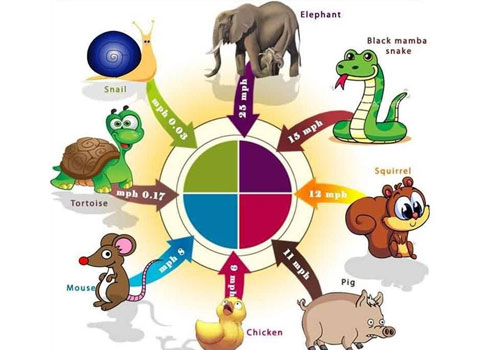 Terrestrial Animals and Their Adaptational Characteristics