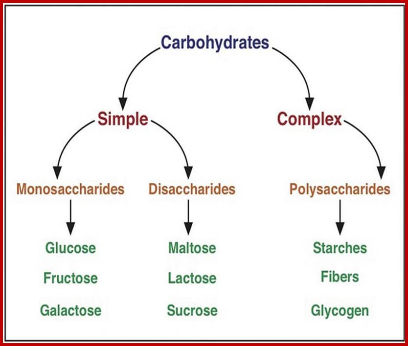 Formaldehyde and Carbohydrates