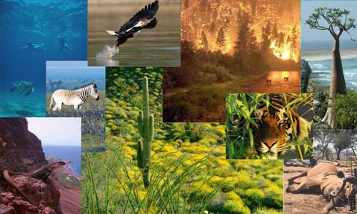 Causes of Extinction of Wildlife and It's Conservation