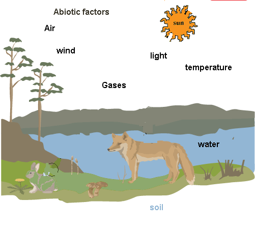 Elements of Environment