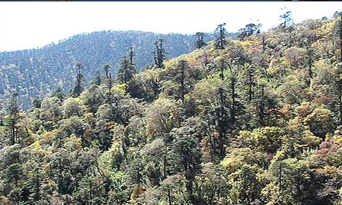 Forest and types of forest found in Nepal