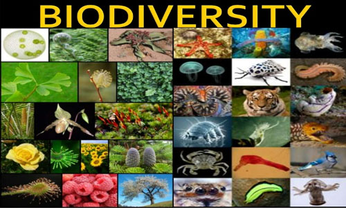 Biodiversity and its Types