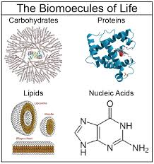 Amino acids, Proteins Lipids or Fats and Steroids ( Biomolecules )