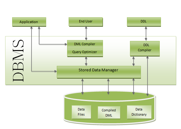 Introducing to Database and Database Management System