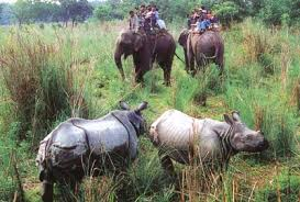 Wildlife and forest conservation
