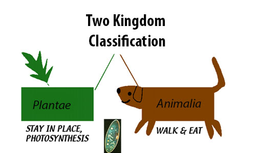 Two Kingdom Classification