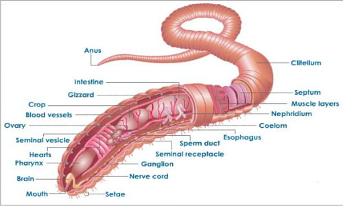 Introduction to Earthworm