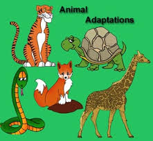 Introduction to Animal Adaptation