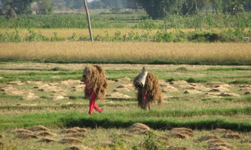 Effects on the Terai Ecosystem and its Mitigating Measures