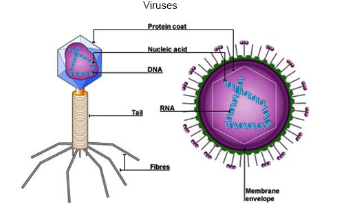 Introduction to Virus
