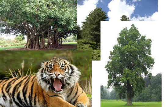 Major Plants and Animals of Nepal