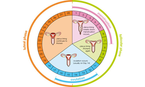 Menstruation and Sex and Reproductive Right