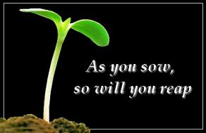 As You Sow So You Reap