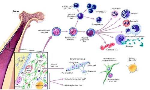 Interrelationship Between Cell, Tissue and Organs in Human Body