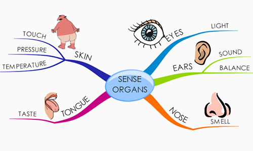 The Sense Organ of Taste, Touch and Smell
