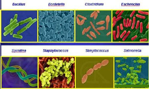 Nutrition in Bacteria