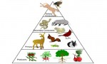 Food Web and Ecological Pyramids