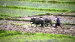 Present State of Agriculture in Nepal