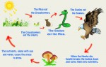 Food chain, Food web and ecological pyramids (Functional aspect of  ecosystem)