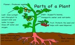 Modification of Different Parts of Plant