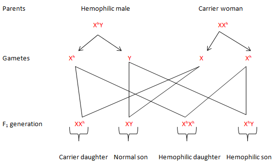 A cross between hemophiliac man and carrier woman