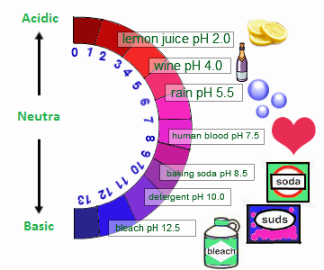 acids bases and natural indicators essay Natural indicators better for detecting acids and bases than man made indicators • join now to read essay natural indicators and other term papers.