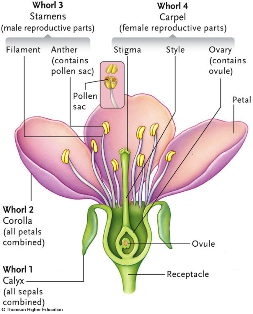 Labeled Diagram Of Plant Reproduction - DIY Wiring Diagrams •