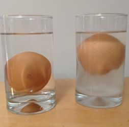 Source; www.pinterest.com Fig: Egg in water and salt water