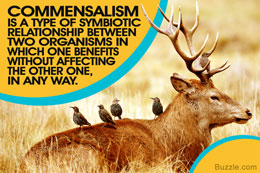 source: www.buzzle.com fig; Commensalism