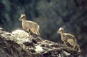 Source: www.buddhanepaltrek.com Fig: Dhorpatan Wildlife Reserve