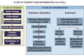 😂Flow of energy through cell