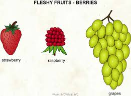 Felshy fruits