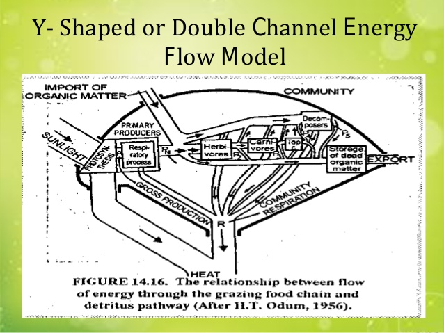 Y-shaped energy flow model