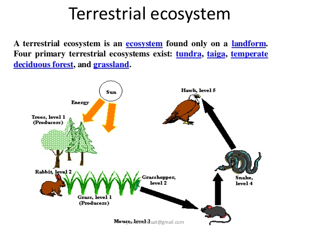 Introduction to Ecosystem | Notes, Videos, QA and Tests | Grade 11>Biology> Ecosystem | Kullabs