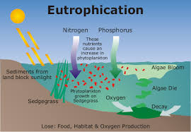 sachiinkboilogy.weebly.com figure: Eutrophication