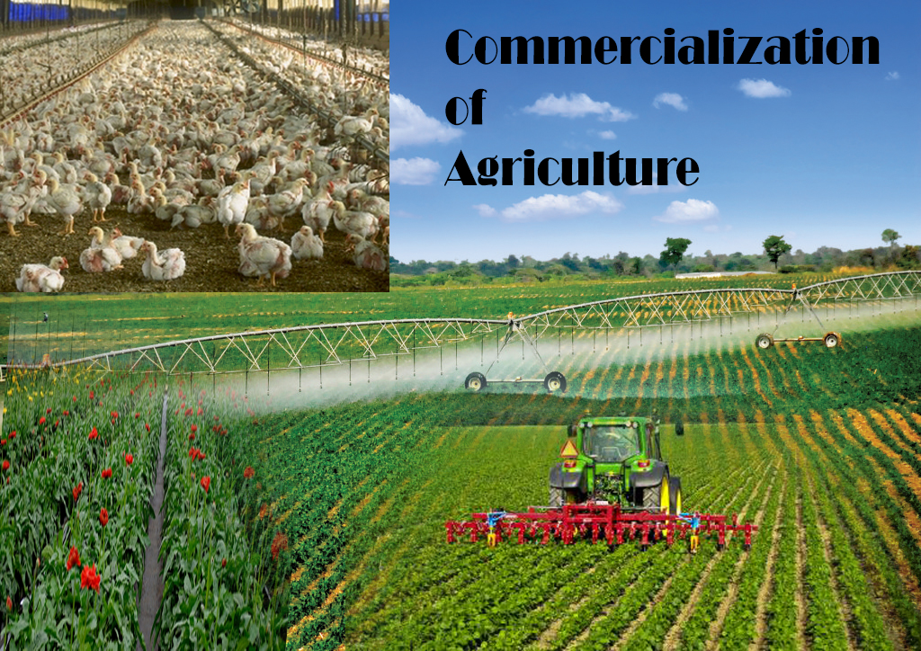 commercialization of agriculture On this third note related to commercialization strategies that add value and  facilitate market access for agricultural producers, we will share progress on the  first.