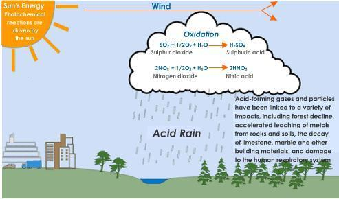 acid rain and its effects on environment Acid rain and its harmful effects category: environment,  the effects of acid rain on the public health and on the animals may be  environment, essays,.