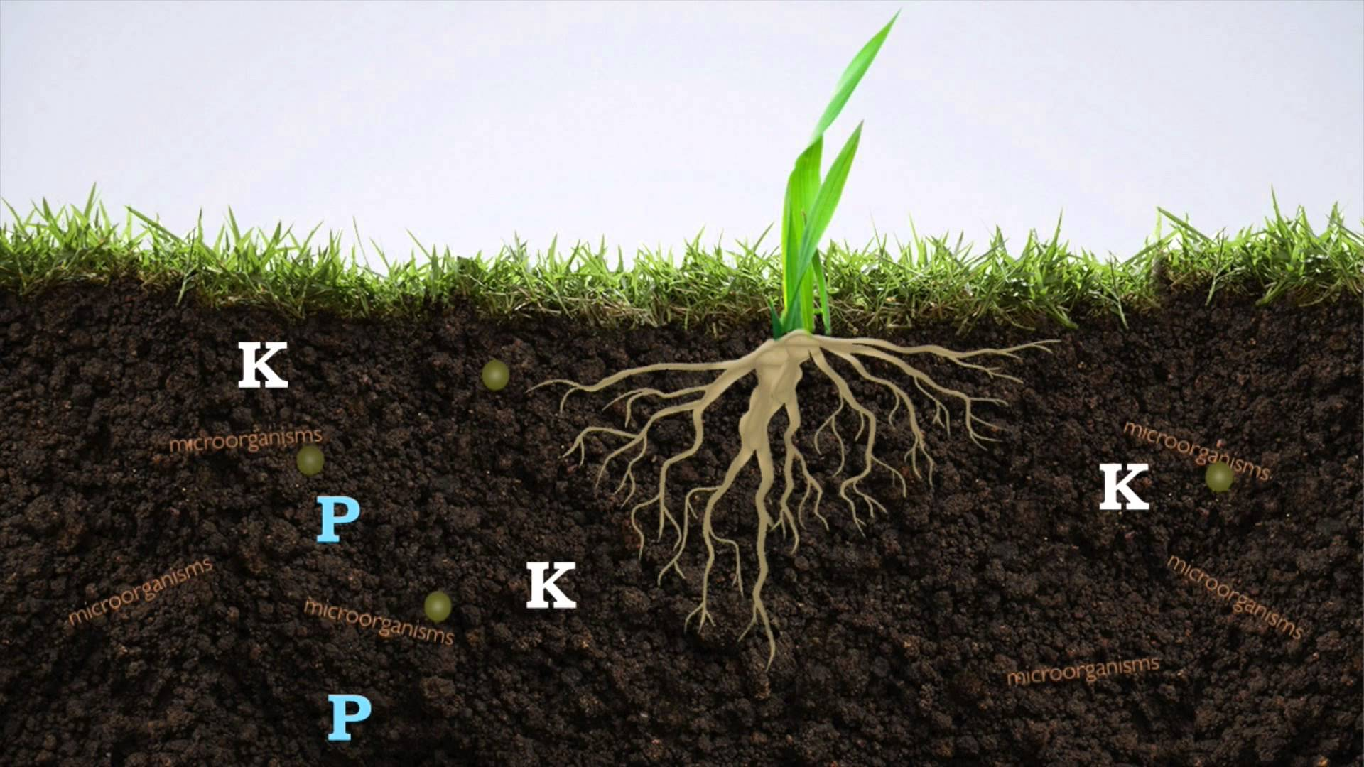 Source: www.youtube.com fig: Manure in soil