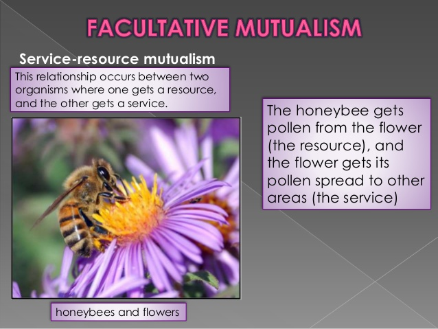 source: www.slideshare.net fig: Mutualism