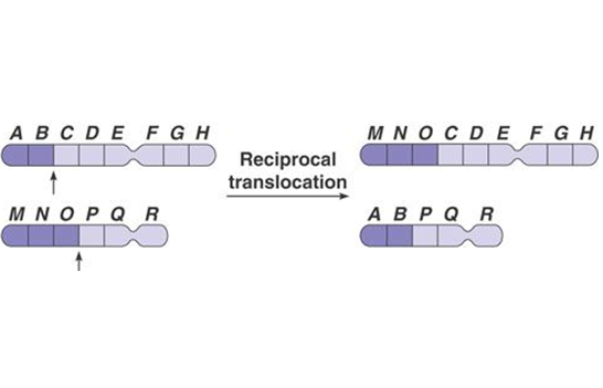 source: ruthusher.com fig:reciprocal translocation