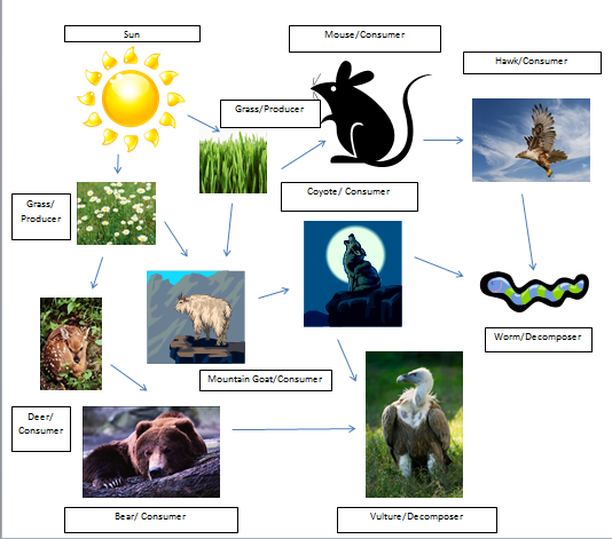 ecosystem and food web Biodiversity and ecosystem functioning in evolving food webs k t allhoff, b drossel published 25 april 2016doi: 101098/rstb20150281 k t allhoff.