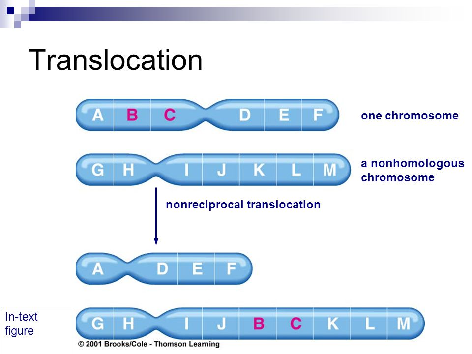 source: slideplayer.com fig:non-reciprocal translocation