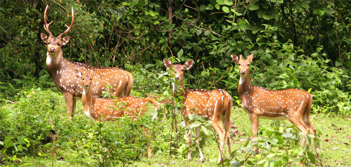 Source: www.nepaltrekkingpass.com Fig: Koshi Tappu Wildlife Reserves