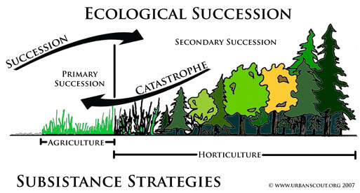 source: ecology-project.weebly.com fig: Succession